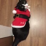 サンタさんがやって来ました!