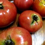 トマトの嫁入り。