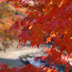 秋晴れを願って…☆