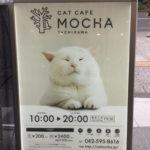 立川の新しい猫カフェ