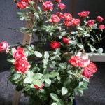 花コレクション3