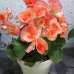 花コレクション5