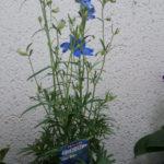 花コレクション6
