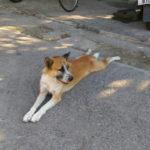 Chiangmai  犬と猫