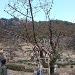 檜原村 ボランティア活動