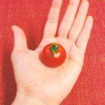 今日のおやつは 昨日のチョコレートに引き続き、アリネさんからの頂き物のトマト♪